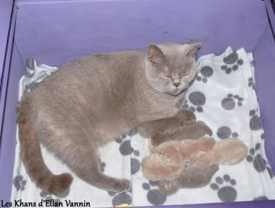 Lamia et ses chatons