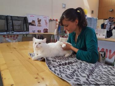 Osteopathie chat Sibérien